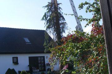 Unerlaubte Baumfällung durch Handwerker des Nachbarn – Haftung