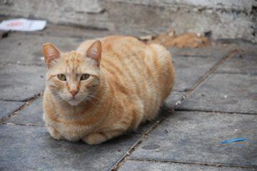 WEG – Einführung von Leinenzwang für Katzen