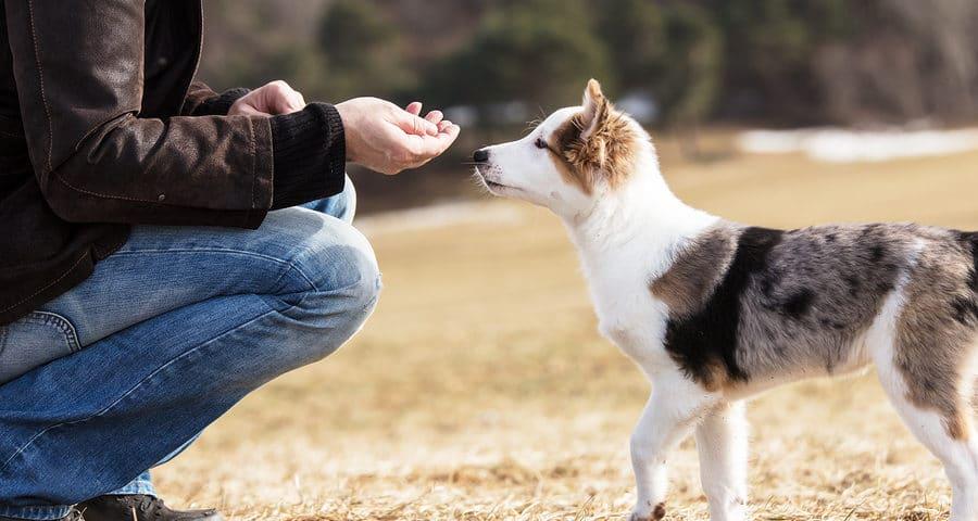 Hundefütterung durch Nachbar – Unterlassungsanspruch