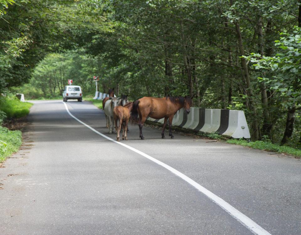 Tierhalterhaftung: Beaufsichtigung eines Pferdes an einer Landstraße