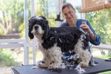 Schadensersatz bei einem Hundebiss in einem Hundesalon
