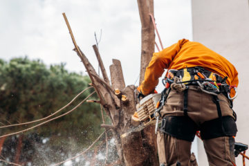 Dürfen Mieter Bäume fällen, wenn sie die Gartenpflege übertragen bekommen haben?