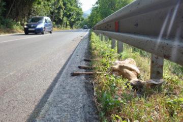 Teilkaskoversicherung – Wildunfall – verspätete Schadensmeldung