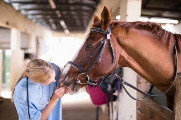 Tierarzthaftung – Darlegungslast und Beweismaß für groben Behandlungsfehler