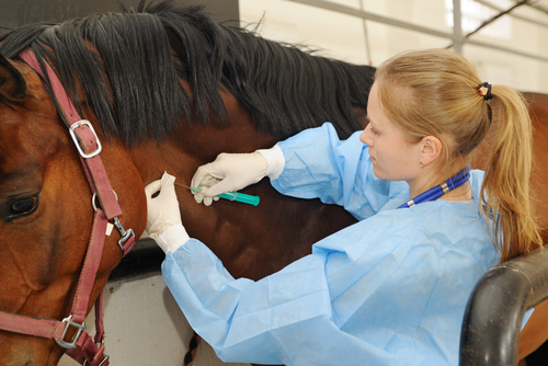 Tierarzthaftung - Darlegungslast grober Behandlungsfehler