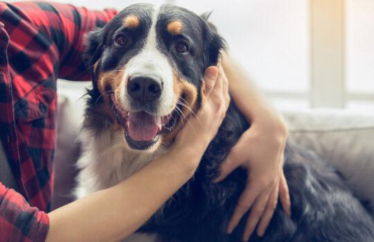 Zustimmung Vermieter zur Haltung eines großen Hundes in Mietswohnung