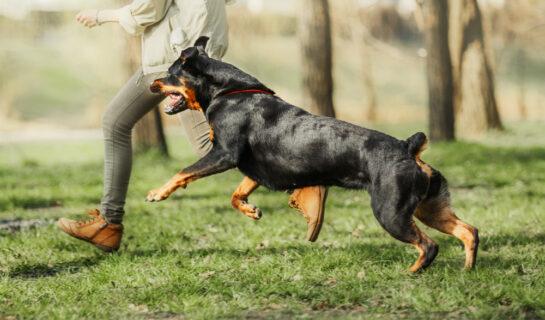 Tierhalterhaftung – Mitverschulden bei Verletzung