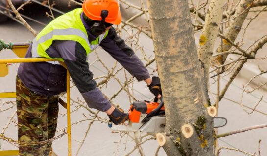 Schadensersatzanspruch gegen Nachbarn wegen unsachgemäßer Baumbeschneidung